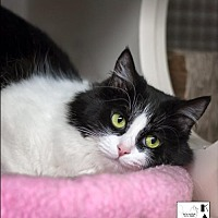 Adopt A Pet :: Guinevere - Albuquerque, NM