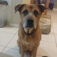 Adopt A Pet :: Mack - Davie, FL