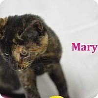 Adopt A Pet :: Mary - Miami Shores, FL