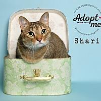 Adopt A Pet :: Shari - Pearland, TX