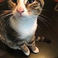 Adopt A Pet :: Tabby Beth - Woodstock, GA