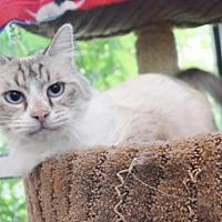 Adopt A Pet :: *HITOSHI - Sacramento, CA