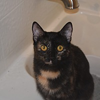 Adopt A Pet :: Marseille - Los Angeles, CA