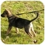 Photo 3 - German Shepherd Dog/Labrador Retriever Mix Puppy for adoption in Rigaud, Quebec - Spice