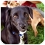 Photo 1 - Terrier (Unknown Type, Small) Mix Dog for adoption in Fresno, California - Duke
