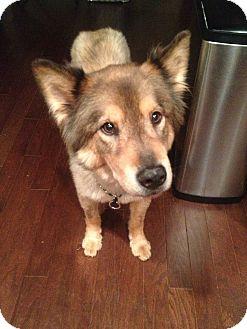 German Shepherd Dog Mix Dog for adoption in Alpharetta, Georgia - Della