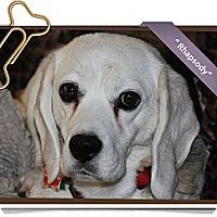 Adopt A Pet :: Rhapsody - Portland, OR