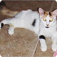 Adopt A Pet :: Cassandra - Chandler, AZ