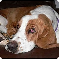 Adopt A Pet :: Ollie Mae - Phoenix, AZ