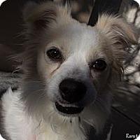 Adopt A Pet :: Avery - Mission Viejo, CA