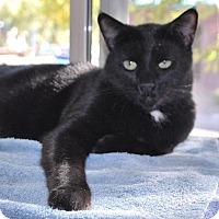Adopt A Pet :: Adam - Prescott, AZ