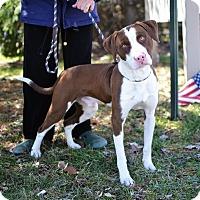 Adopt A Pet :: Rango - Springfield, IL