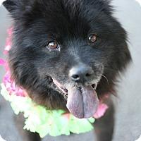 Adopt A Pet :: Happy AKA Jessica - Canoga Park, CA