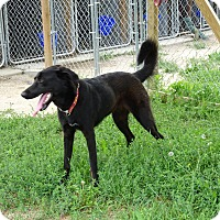 Adopt A Pet :: Gizelle - Delaware, OH