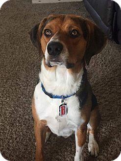 Hound (Unknown Type) Dog for adoption in Ogden, Utah - Bently