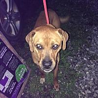 Adopt A Pet :: Bruce - Staunton, VA