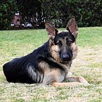 Adopt A Pet :: Larsen - San Diego, CA