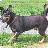 Adopt A Pet :: Sam - Lincolnton, NC