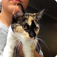 Adopt A Pet :: T-7 - Triadelphia, WV