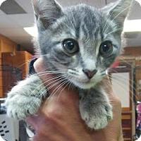 Adopt A Pet :: Houdini - Ashtabula, OH