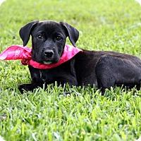 Adopt A Pet :: Margo - South Dennis, MA
