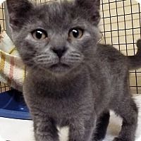 Adopt A Pet :: Titan - Grants Pass, OR