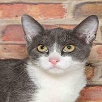 Adopt A Pet :: BOBBY - Alameda, CA