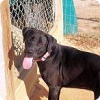 Adopt A Pet :: Axel - Rexford, NY