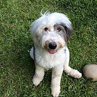 Adopt A Pet :: Fan Bing Bing - Richmond, BC