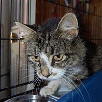 Adopt A Pet :: Sandra - Brainardsville, NY