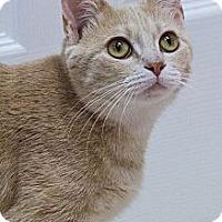 Adopt A Pet :: Cinnamon Buns - Chicago, IL