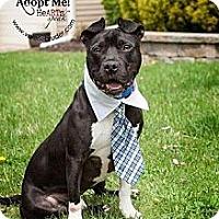 Adopt A Pet :: Prince - Voorhees, NJ