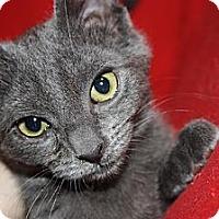 Adopt A Pet :: Vixen (LE) - Little Falls, NJ