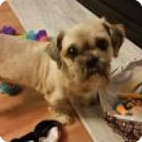 Adopt A Pet :: Bandit- - Mt Gretna, PA