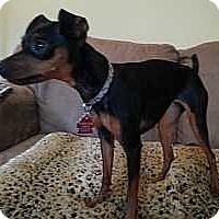 Adopt A Pet :: Evie - Nashville, TN