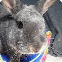 Adopt A Pet :: Payson - Newport, DE