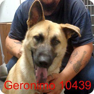 German Shepherd Dog Mix Dog for adoption in Greencastle, North Carolina - Geronimo