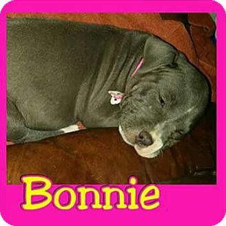 Pit Bull Terrier Mix Puppy for adoption in Mesa, Arizona - Bonnie