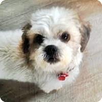 Adopt A Pet :: Artie - Toronto, ON
