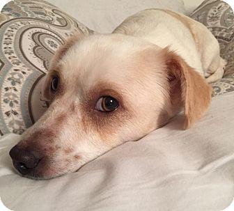 Terrier (Unknown Type, Medium) Mix Dog for adoption in Minneapolis, Minnesota - Cora
