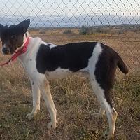 Adopt A Pet :: SPARKY - San Pedro, CA