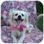 Photo 2 - Terrier (Unknown Type, Small)/Pekingese Mix Dog for adoption in Sacramento, California - Sassy