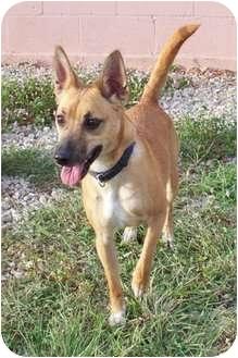 Terrier (Unknown Type, Small) Mix Dog for adoption in Sullivan, Missouri - Kaya