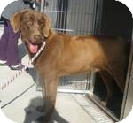 Labrador Retriever Mix Dog for adoption in East Hartford, Connecticut - Angie