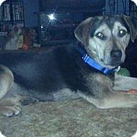 Adopt A Pet :: Poppy - Hastings, NY