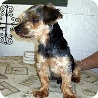 Adopt A Pet :: Collin - Dartmouth, MA