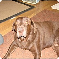 Adopt A Pet :: Moose - Chandler, AZ