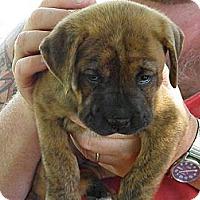 Adopt A Pet :: Tippy - York, SC