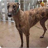 Adopt A Pet :: Jonah - Philadelphia, PA