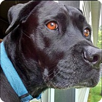 Adopt A Pet :: Spooky - Emmett, MI